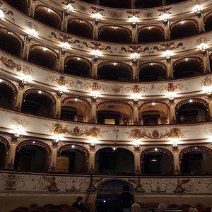 los palcos centrales