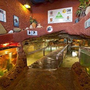 Entrada Aquarium