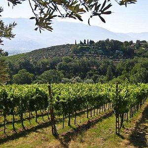 wijngaard Cantina Fuccelli