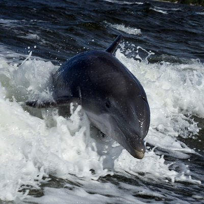 One of many dolphin shots on Sanibel Dolphin Tours