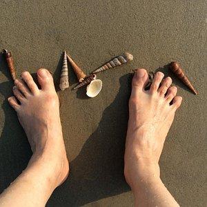色々な貝殻