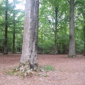 De Brand, open vlakte in het bos