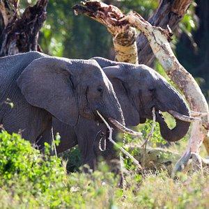 Tanzania, a safari and cultural destination