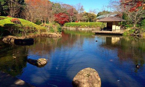 Пруд в я японском саду