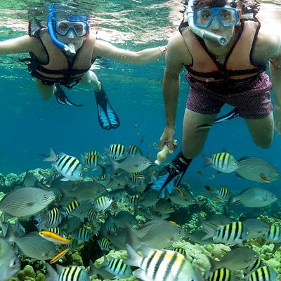 Snorkeling the Coral beach
