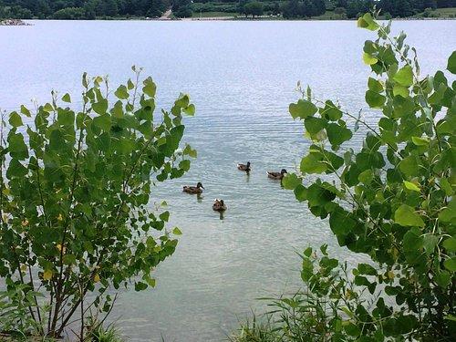 jezero a jeho obyvatelé