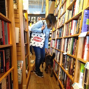 Shop dogs help you shop at Parnassus Books.