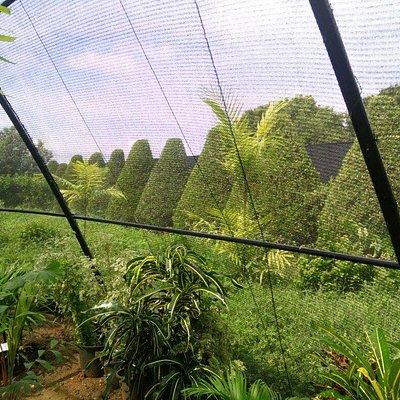 Cool green area in sunny Hambanthota.