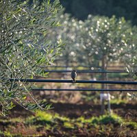 Cadenela orchards