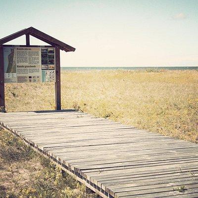 Randu meadows