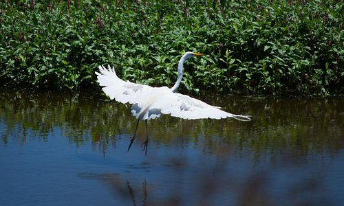 Birding in the Wetlands of Watsonville - Photo courtesy of Paul Schraub