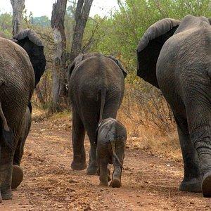 Family walk - Discover Victoria Falls