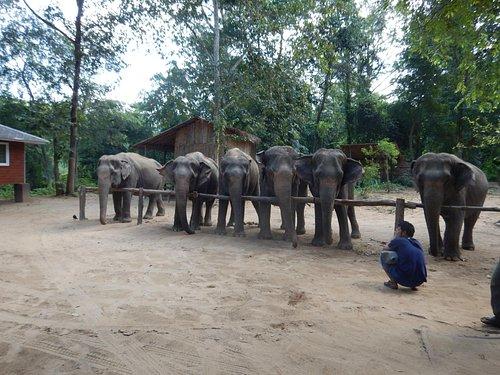 A line up of the elephants