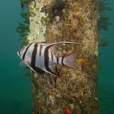 Sea life on Port Noarlunga Reef