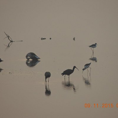 Birds in the early morning at the dam