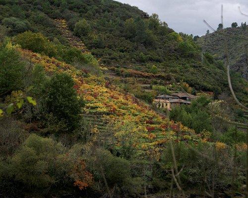 Los viñedos