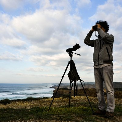 Birdwatching the cliffs of Aljezur