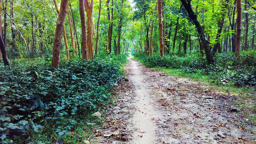 Anandanagar Forest