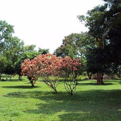Forest Park, Bhubaneswar