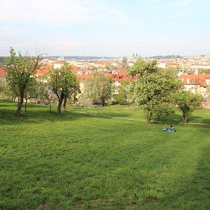The Seminary Garden