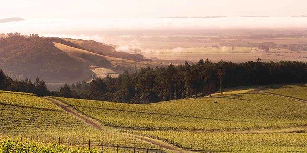 The Historic Hyland Vineyard (Stunning landscape)