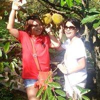 Panen durian