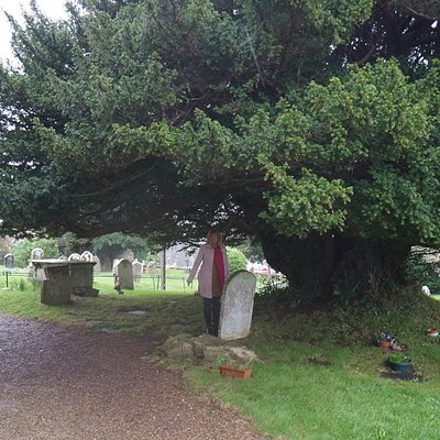 Shelter Under The Yew