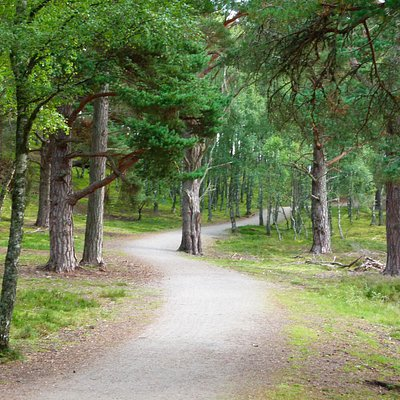 The trail can be tricky to find around the Aviemore Gold Course