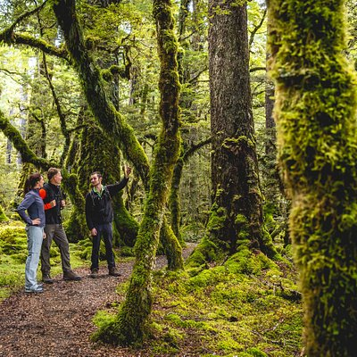 Guided Walk in Fiordland