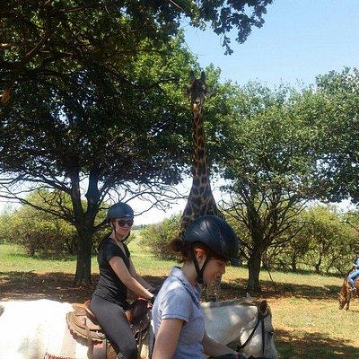 African Horse Safaris