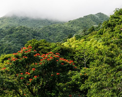 Luquillo Mountains and Mist