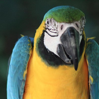 Another beautiful parrot