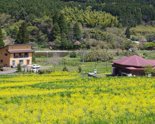 春の上場高原(菜の花)