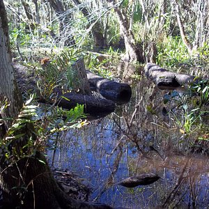 This is the only part of the trail that was swampy.