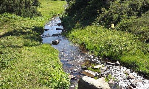 Paradise Meadows - strathcona park