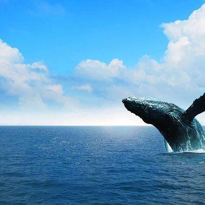 Whale watching Tour in Samana