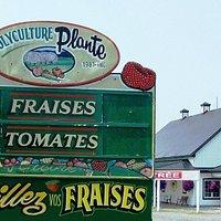 Polyculture Plante, fraises en kiosque, tomates..., auto-cueillette, pâtisserie, boulangerie