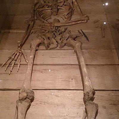 Den store vikings skelet