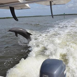 Another playful dolphin chases Jaybird II