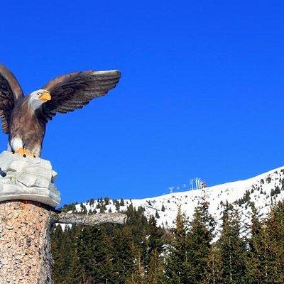 L'aigle de la piste des animaux !