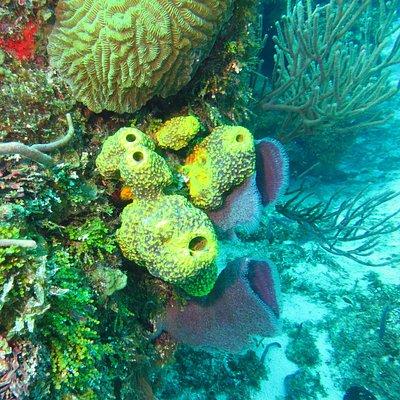 coral/sponges