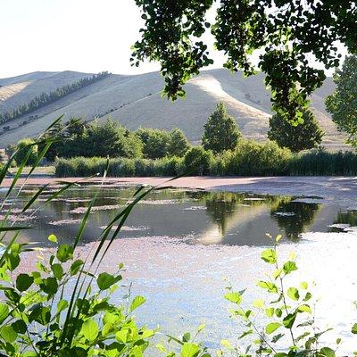 Taylors Dam