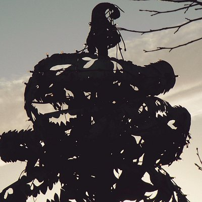 Carlow's famous Liberty Tree remembers 1798 in Carlow