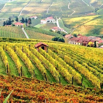 Autumn colours in Barolo wine country