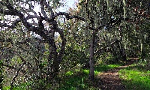 Enchanting trails Garland Ranch Regional Park