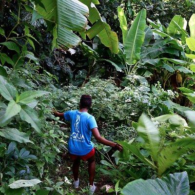 exploriing streams and farmland