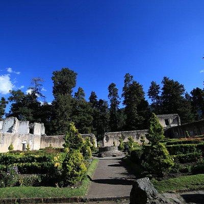 main back garden
