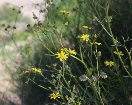 Flowers of Wakan