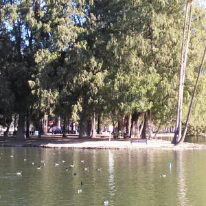 This park is gorgeous. Can spend an entire day here easily. Bring bread for the ducks n pack a n