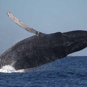 Best Whale Watching Tours with experts
